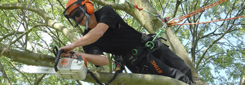 Choosing a tree surgeon
